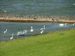 Excursie Friesland