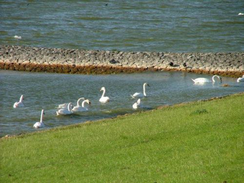 gaialogische ervaringstocht Excursie Friesland